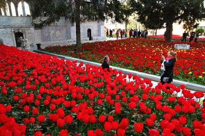 tulip istanbul tour ke istanbul turki