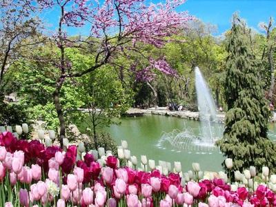 tulip istanbul wisata tour ke istanbul turki