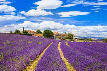 tour turki kuyucak taman bunga lavender turki